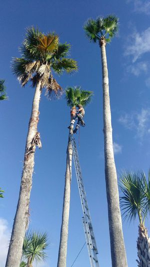 Palm and trees service