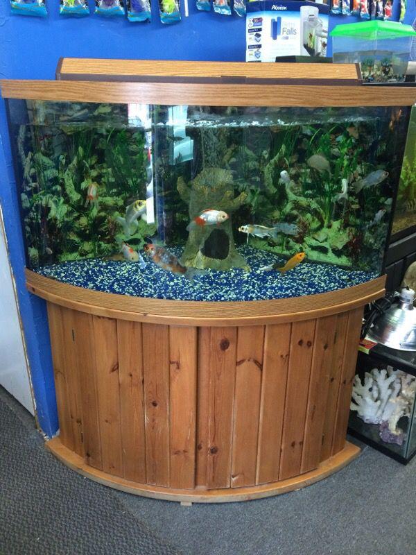 92 gallon corner bow front aquarium fish tank furniture for Bow fish tank
