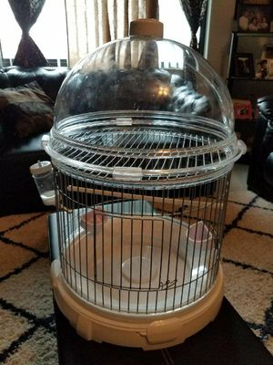 Birds cage and parakeet femal and male