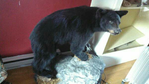Stuffed black bear furniture in gig harbor wa offerup for Furniture gig harbor