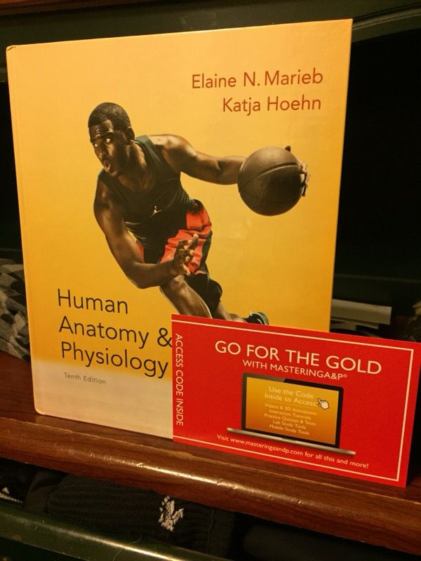 Magnificent Human Anatomy And Physiology With Masteringa&p Picture ...