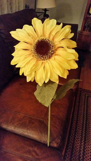 3ft tall sunflower