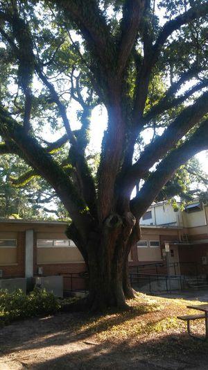 Se cortan y se trimean arboles.cut trees service good price (contact info hidden)
