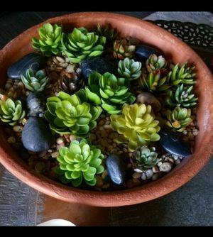 Gorgeous Succulent Arrangment