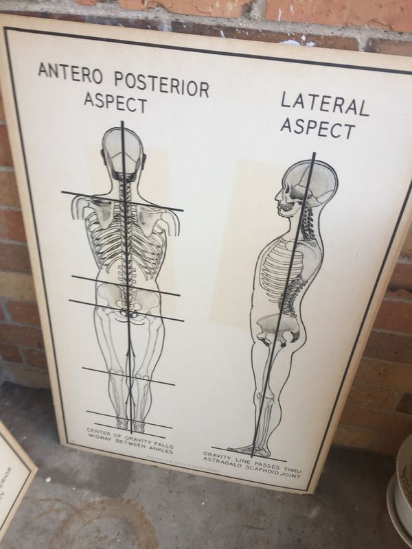 Dorable Vintage Anatomy Poster Motif - Anatomy Ideas - yunoki.info