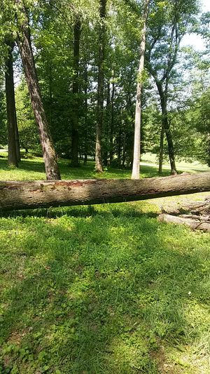Free firewood come and cut it and take it away easy to get to