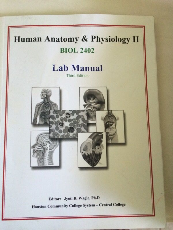 Human anatomy and physiology II lab manual (Books & Magazines) in ...