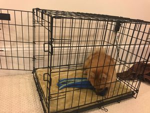 Crate for puppies - PUPPY IS NOT FOR SALE