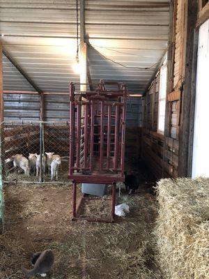 Sheep and goat facility