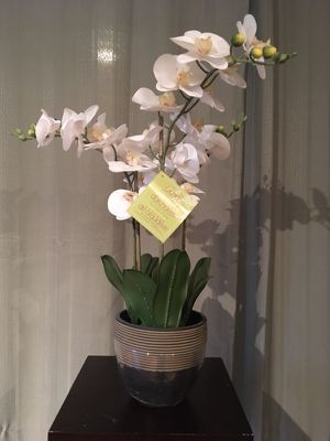 Two Artificial Orchids