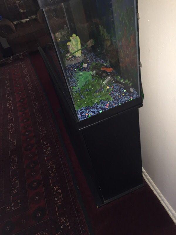 5 Gallon Fish Tank 800 Vivid Aquariums Photos 2017