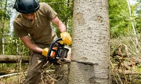 Tree removal We also speak Espanol