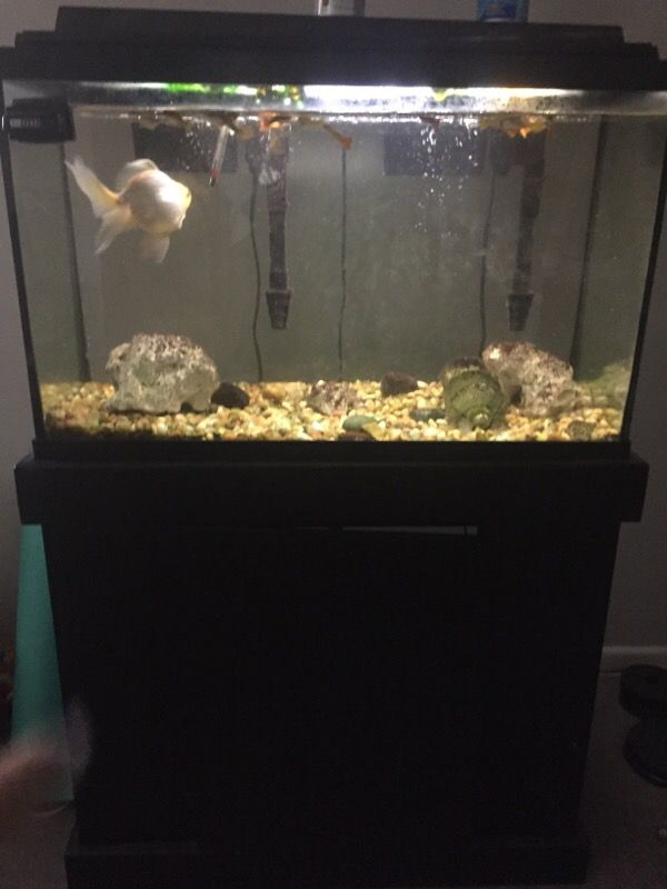 29 gallon fish tank package pet supplies in naperville il for 29 gallon fish tank