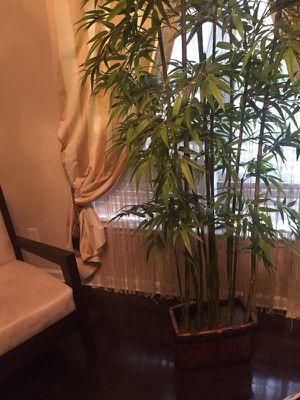 Large plant decor