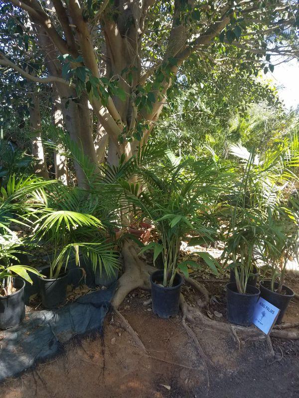 PLANTS FRUIT TREES PINES PALMS SHRUBS SUCCULENTS BUSHES PALMS ...