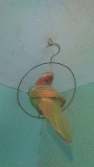 2 plastic birds