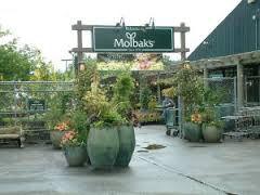 Molbaks items