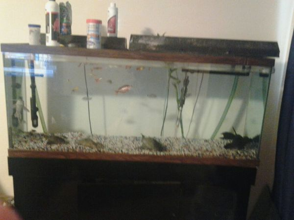 55 gallon fish tank with stand and supplies pet supplies for 55 gallon fish tank kit