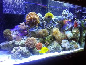 Saltwater 60g ,,ro,,di,,50g with pump,, power Reservoir. After the hurricane storm