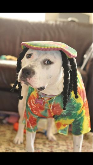 Rasta Impasta Rasta Dog Halloween Costume XXL DISCLAIMER: I AM NOT SELLING THE DOG