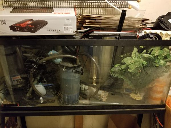 55 gallon fish tank With 2 magnum 350 canister filters Pet