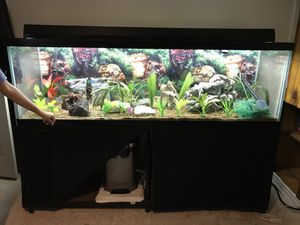 125 Gallon Fish Aquarium Setup (Fish Tank)