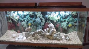 55 gal Fishtank with 2 lights, rocks and decoration. Good conditions no leaks or cracks.