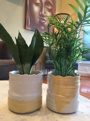 Snake and Polar Palms Plants in a pair of Gold white pots
