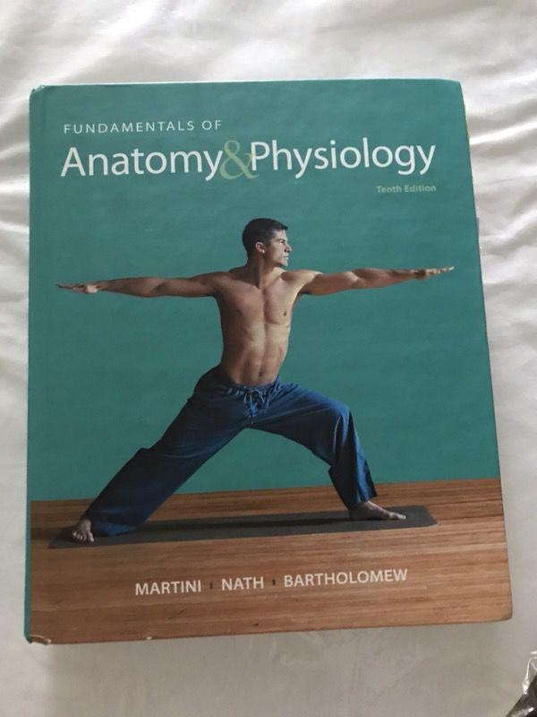 Erfreut Anatomy And Physiology Martini Ideen - Menschliche Anatomie ...