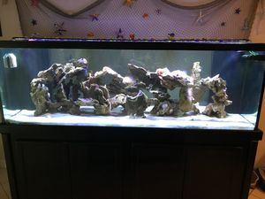 180 Gallon Saltwater Fish Tank
