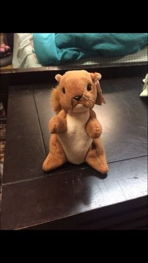Nuts Beanie Baby
