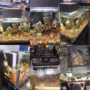 Fluval Edge 6 gallon fish tank complete set up with Sponge Bob decor $100