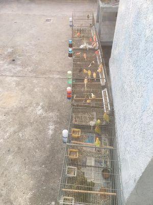 Cages/ jaulas