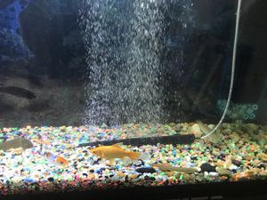 55 gall fresh water tank. Everything including ,LED lights ,filter .air pump Couple fish