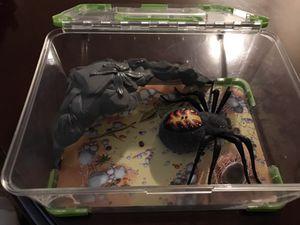 Wild Pets Spider Habitat and Spider