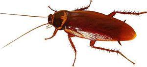 Killing Cockroach
