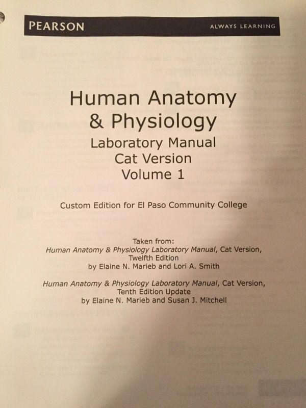 Erfreut Anatomy And Physiology Lab Manual Ideen - Menschliche ...