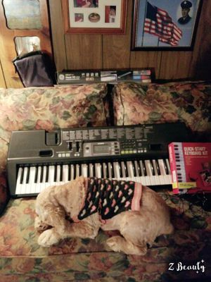 Casio Keyboard for Christmas.