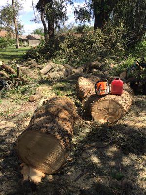Tree and Debris Crew