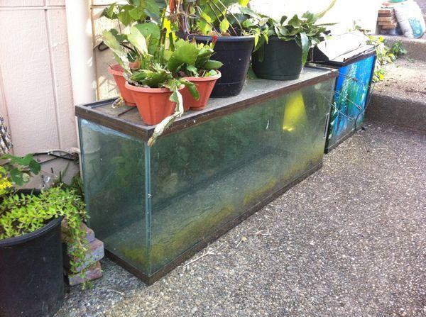 60 gallon fish tank household in seattle wa offerup for 60 gallon fish tank