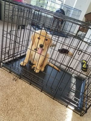"30"" pet crate (puppy not included)"