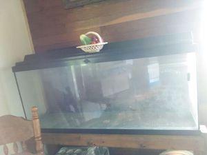 55 gallon,fish tank