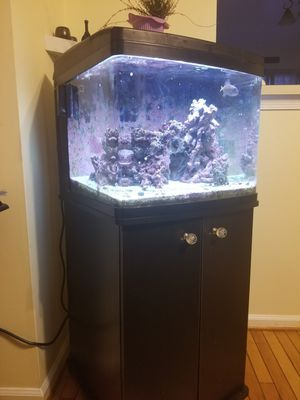 Biocube salt water fish tank