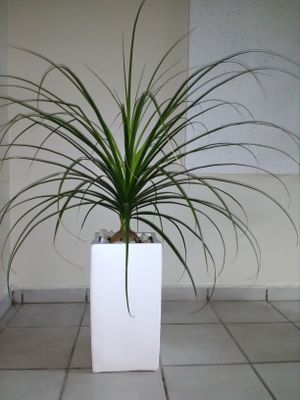 Home Decor, decorative Plant in large planter pot, living room dining room bedroom