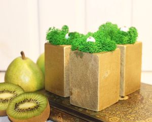 Naturally Preserved Moss Decor