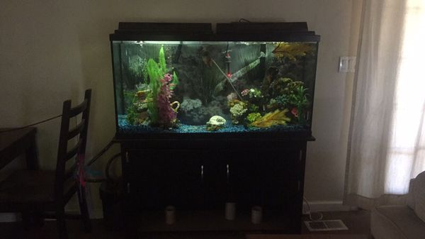 60 gallon fish tank with everything pet supplies in kent for 60 gallon fish tank